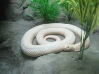 Snake Farm (Thai Red Cross Farm)