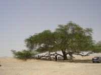 Jebel Al Dukhan and the Tree of Life
