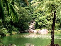 Caribbean National Forest (El Yunque)