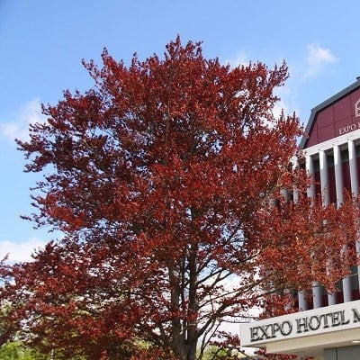Expo Hotel Milan (25km from Milan)