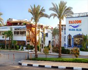Falcon Naama Blue