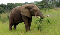 Niassa Game Reserve