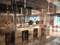 Cradle of Humankind and Maropeng Visitor Centre