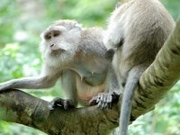 Sacred Monkey Forest of Padangtegal