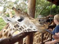 The Giraffe Centre