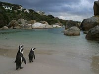 Simonstown and Boulders Beach