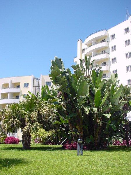 Jardins d'Ajuda Suite